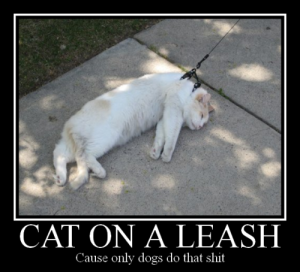 We never actually saw the cat on its leash.  We did however see the leash left in a heap on their deck.  According to neighbour guy the experience they had was similar to above and, apparently, even included a hung puss.